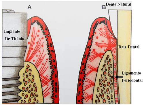 Fibras del ligamento periodontal pdf files