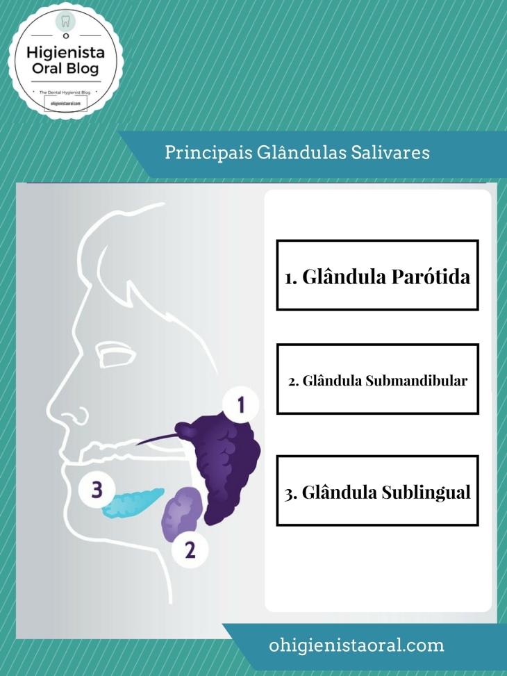 Principais Glândulas Salivares.jpg